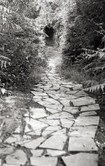 Churwell Woods 3 (vickyhindle) Tags: 35mmfilmphotography blackwhite churwell woods canoneos3 canonef50f14 ilfordfp4 ilfosol3developer