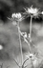 img326 (vickyhindle) Tags: 35mmfilmphotography blackwhite churwell woods canoneos3 canonef50f14 ilfordfp4 ilfosol3developer
