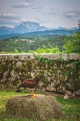 YGO_5750 (RawSavoyard) Tags: château montrottier aigles léman lovagny savoie haute pontverre 2019 rawsavoyard