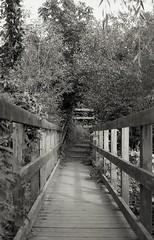 Churwell Woods 5 (vickyhindle) Tags: 35mmfilmphotography blackwhite churwell woods canoneos3 canonef50f14 ilfordfp4 ilfosol3developer