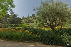 Parc Güell Barcellona (capellini.chiara) Tags: fiori flower parcgüell gaudì natur natura nature green catalunia spain spagna barcelona barcellona