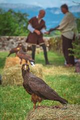 YGO_4934 (RawSavoyard) Tags: château montrottier aigles léman lovagny savoie haute pontverre 2019 rawsavoyard