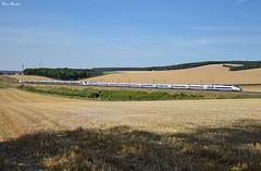 Sur la LGV (Marc_135) Tags: tgv tgvréseau tgvduplex tgv4526 tgv214 lgv lgvsudest été train rail champs blé bleu gris