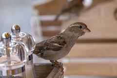 Gorriones en Ljubljana (José M. Arboleda) Tags: ave pájaro gorrión alimento mano ljubljana eslovenia canon eos 5d markiv ef24105mmf4lisusm josémarboledac