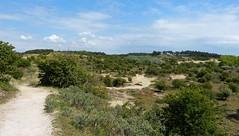 Nationaal Park Zuid-Kennemerland (joeke pieters) Tags: 1470653 panasonicdmcfz150 kennemerduinen nationaalpark zuidkennemerland noordholland nederland netherlands holland nswandeling santpoortnoordoverveen duinlandschap duinen dunes landschap landscape landschaft paysage