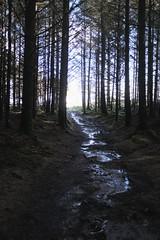 Safe in the wood (b-nik) Tags: wood trees sky light path evening magic forest fujifilm x100f