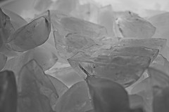 198/365 Ice (OhWowMan) Tags: ohwowman nikon nikkor d3300 acdseepro9 my2019challenge 365project animageaday dailyphotography blackandwhite blackwhite bw black white monochrome 365the2019edition 3652019 day198365 17jul19 ice cold freeze frozen