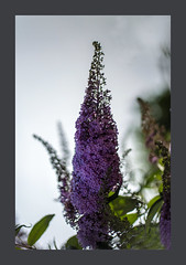 Patterns of Nature (blasjaz) Tags: blasjaz botanik blütenstand pflanze pflanzen