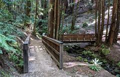 First Crossing (LeftCoastKenny) Tags: elcortedemaderacreek hikers trees brush ferns bridges rock moss creek water path trail