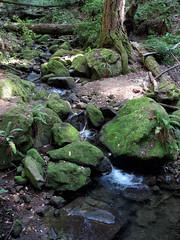 The Creek (LeftCoastKenny) Tags: elcortedemaderacreek trees brush ferns moss rock creek water logs