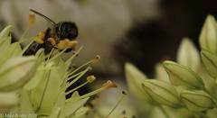 Photo of Pollinator!!