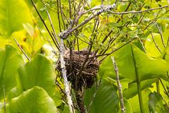 7K8A3213 (rpealit) Tags: scenery wildlife nature great swamp national wildife refuge bird nest