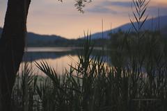 Lago di Lago e Fratta (Mi-Fo-to) Tags: lagoefratta revine sera fujifilm a5 xa5 7artisans 50 mm 11 lowlight lake nature landscape evening leafs foglie canneto cane pond stagno bokeh colors velviasimulation golden hour series