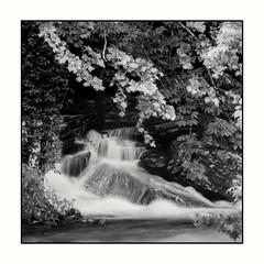 Flowing out of the forest. (CDBrunson) Tags: flowingwater nature cherokeenationalforest forest 35mmfilm filmphotography ilforddelta100 blackandwhitelandscape blackandwhitefilm