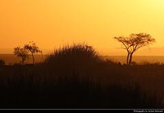Sunset, Near Uis, Namibia (JH_1982) Tags: sky evening sun glow sunset ocaso sonnenuntergang coucherdesoleil pôrdosol tramonto закат zonsondergang zachódsłońca solnedgång solnedgang auringonlasku apus залез matahariterbenam mặttrờilặn 日落 日没 غروب light yellow licht abend dusk dämmerung mountains mountain gebirge silhouette silhouettes trees tree landscape nature scenery scenic desert wüste africa namib uis namibia namibië 纳米比亚 ナミビア 나미비아 намибия natur african