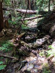 Lawrence Creek (LeftCoastKenny) Tags: elcortedemaderacreek trees logs brush ferns rock moss creek water