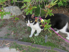 20190718 Rosy out for a Walk (Dolores.G) Tags: 365the2019edition 3652019 day199365 18jul19