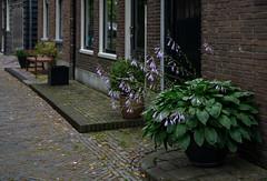 Edam (Julysha) Tags: edam summer july 2019 thenetherlands noordholland flowers town acr d850 sigma241054art street