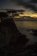 Dark Cypress (waves_and_wonders) Tags: moody view water waves