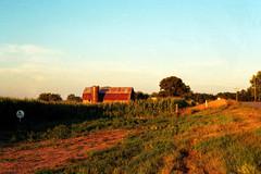 August Maize (stephen.michaels) Tags: canoneos55 canonef28mmf28 film kodakgold200 barn corn maize michigan summer