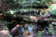 2019-07-18 Little Cranberry Lake Trail 107 (1024x680) (-jon) Tags: anacortes skagitcounty skagit washingtonstate washington salishsea fidalgoisland sanjuanislands hike hiking walk walking woods forest pnw pacificnorthwest littlecranberrylake cranberrylake fern tree trail path anacortescommunityforestlands acfl trail107 a266122photographyproduction