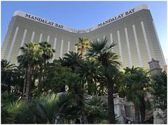 Mandalay Bay - S Las Vegas Boulevard - Las Vegas NV (Markus Alydruk) Tags: lasvegas nv nevada usa america madhare sincity clarkcounty mandalaybay casino hotel resort lasvegasboulevard tower building highrise skyscraper palmtrees palms trees plants thestrip