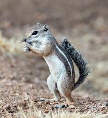 07182019000013011 (Verde River) Tags: squirrel bird birds nature rabbit rabbits