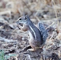 07182019000013006 (Verde River) Tags: squirrel bird birds nature rabbit rabbits