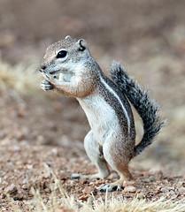 07182019000013010 (Verde River) Tags: squirrel bird birds nature rabbit rabbits