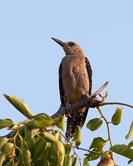 07182019000012983 (Verde River) Tags: squirrel bird birds nature rabbit rabbits