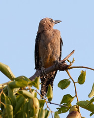 07182019000012981 (Verde River) Tags: squirrel bird birds nature rabbit rabbits