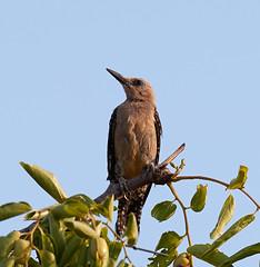 07182019000012979 (Verde River) Tags: squirrel bird birds nature rabbit rabbits
