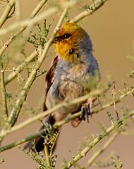 07182019000012956 (Verde River) Tags: squirrel bird birds nature rabbit rabbits