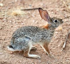 07182019000012967 (Verde River) Tags: squirrel bird birds nature rabbit rabbits