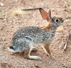 07182019000012966 (Verde River) Tags: squirrel bird birds nature rabbit rabbits