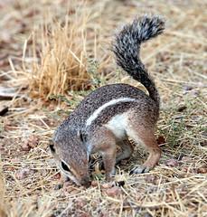 07182019000013019 (Verde River) Tags: squirrel bird birds nature rabbit rabbits