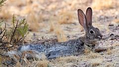 07182019000013029 (Verde River) Tags: squirrel bird birds nature rabbit rabbits