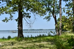 The View Through (donnacurrall) Tags: corotomanriver northernneck virginia trees water river chesapeakebay green dock sailboat