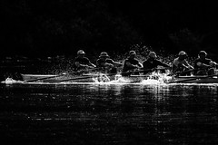 Row Your Boat (Natalia Medd) Tags: bw blackandwhite monochrome rowing row boat morning splash team teamwork sport lake water