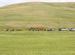 Horse trials (kiwi vic) Tags: mongolia sergelen nomadic nomads horses horseracing trials