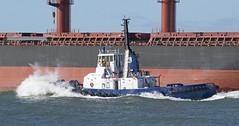 Watagan (~ydoc~) Tags: tug tugboat boat tasports tasmania devonport shipping