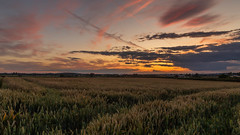 Great British Countryside. (Ian Emerson (Thanks for all the comments and faves) Tags: england sunset farmland farming silhouette nottinghamshire countryside colourful canon6d nottingham signpost outdoor evening clouds harvest
