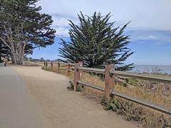 Monterey 6-28-19 (229) (Photo Nut 2011) Tags: monterey california berwickpark pacificgrove