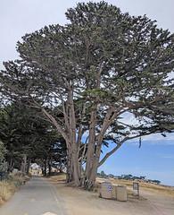 Monterey 6-28-19 (232) (Photo Nut 2011) Tags: monterey california berwickpark pacificgrove