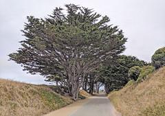Monterey 6-28-19 (308) (Photo Nut 2011) Tags: monterey california pacificgrove berwickpark