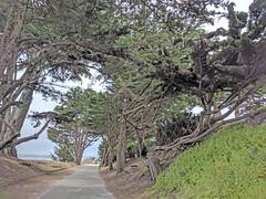 Monterey 6-28-19 (310) (Photo Nut 2011) Tags: monterey california pacificgrove berwickpark