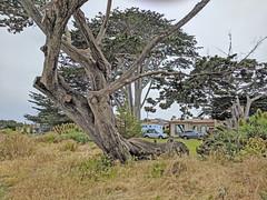 Monterey 6-28-19 (315) (Photo Nut 2011) Tags: monterey california pacificgrove berwickpark