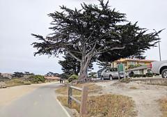 Monterey 6-28-19 (331) (Photo Nut 2011) Tags: monterey california pacificgrove andyjacobsenpark