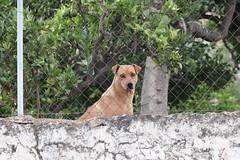 Guarding the fence. (phileveratt) Tags: fencefriday fencedfriday happyfencefriday hff