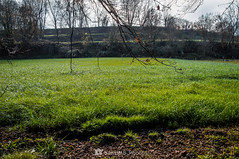 Verde (SantiMB.Photos) Tags: 2blog 2tumblr 2ig santjoanlesfonts garrotxa girona invierno winter geo:lat=4221324870 geo:lon=249969078 geotagged cataluna españa